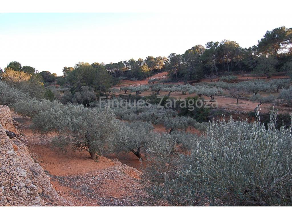 Beautiful Mediterranean rustic estate of 21.900 sq m. surrounded with olive, carob and pine trees. The estate also boasts a cottage and is located in the municipality of Camarles, near the Ebro river delta.