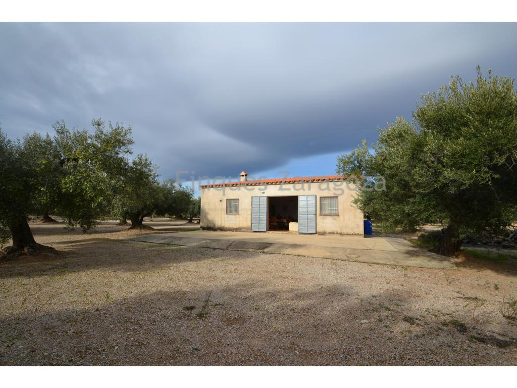 Nice rustic farm of completely flat olive trees, located in the municipality of La Galera, with an area of 10,950m2. In the interior there is a building destined to agricultural store, of a single plant and has a constructed surface of 60m2. Community well water.