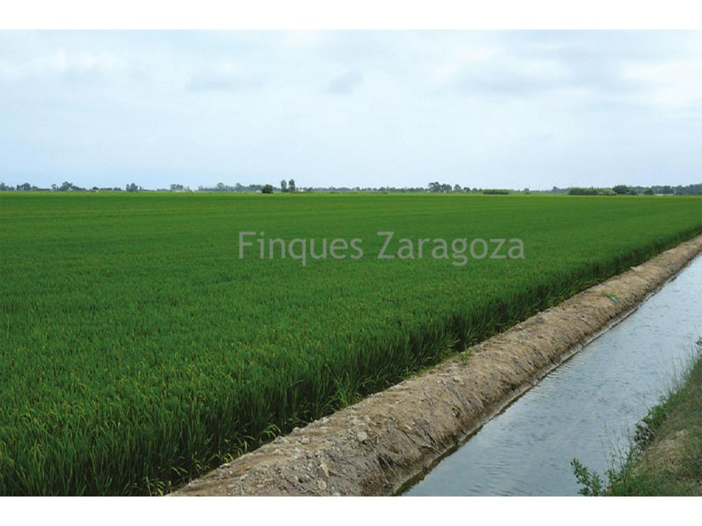 Rice field with 5.16