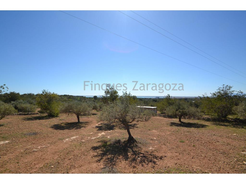 Rustic finca in quiet area with sea views. The plot has 7735m² with olive trees.